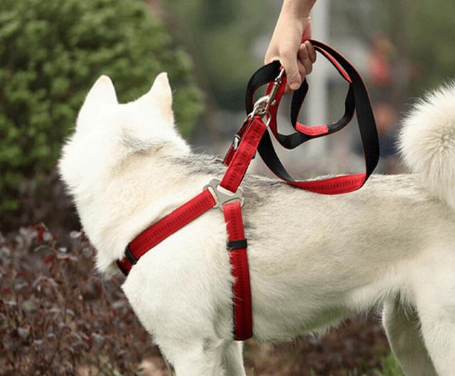 Dây dắt chó Alaska chất liệu cao cấp, thiết kế hiện đại