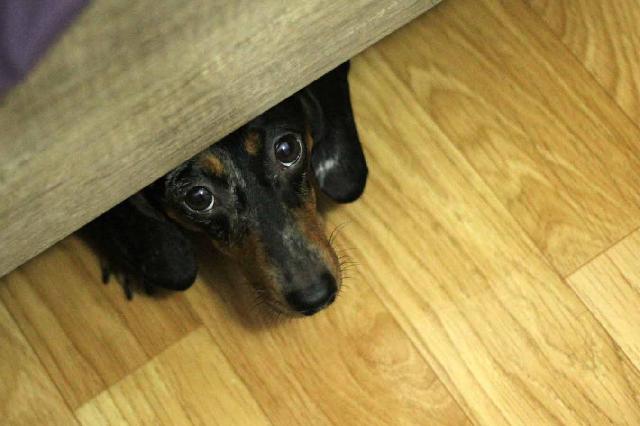 Chó bỏ ăn mắt đổ ghèn biểu hiện nặng nhẹ thế nào?