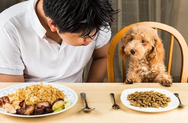 Cho chó ăn bao nhiêu là đủ, cách tính lượng thức ăn một ngày mà chó cần